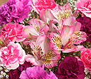 PRODUCT_FLOWERS_Pink_Celebration_small
